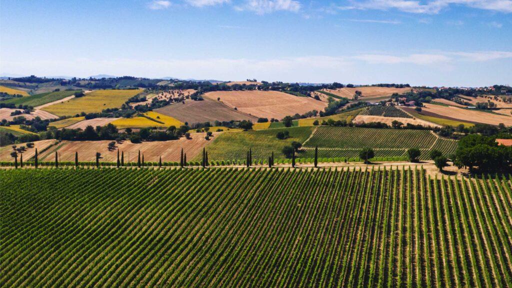 Cantina Buscareto i Migliori Vini Marchigiani